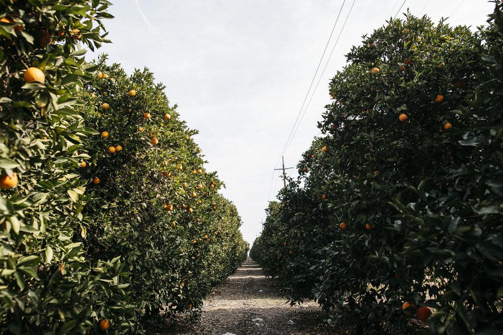 Orange 7.jpg