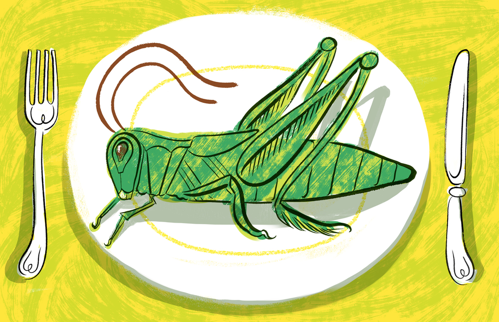 Edible Cricket-New copy.jpg