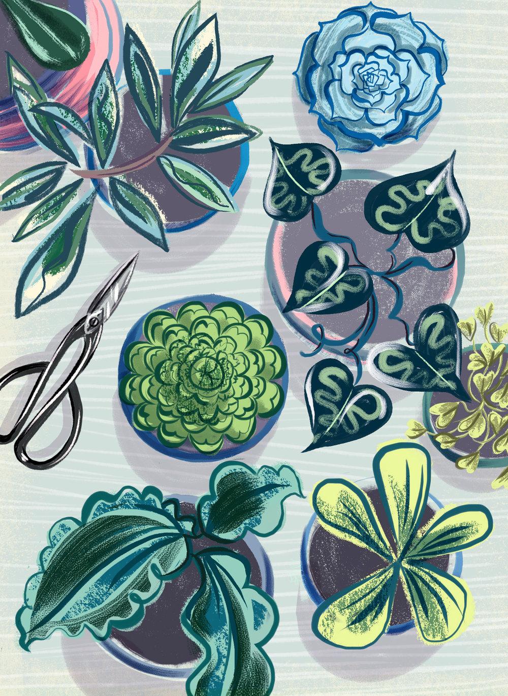 sarahtanatjones-plants1-web.jpg