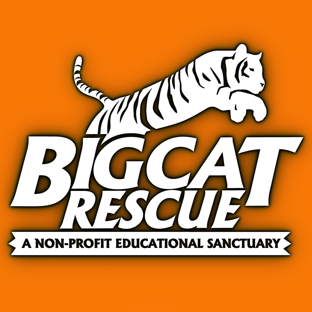 Big Cat rescue.jpg
