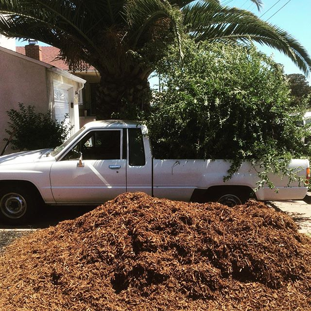 Landscaping.  #notmypresident #chalkyfro #chalkysnextbigthing