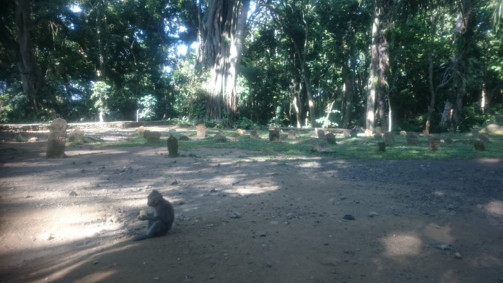 Under the Monkey Forest: a macaque munches some lunch in the cemetery.