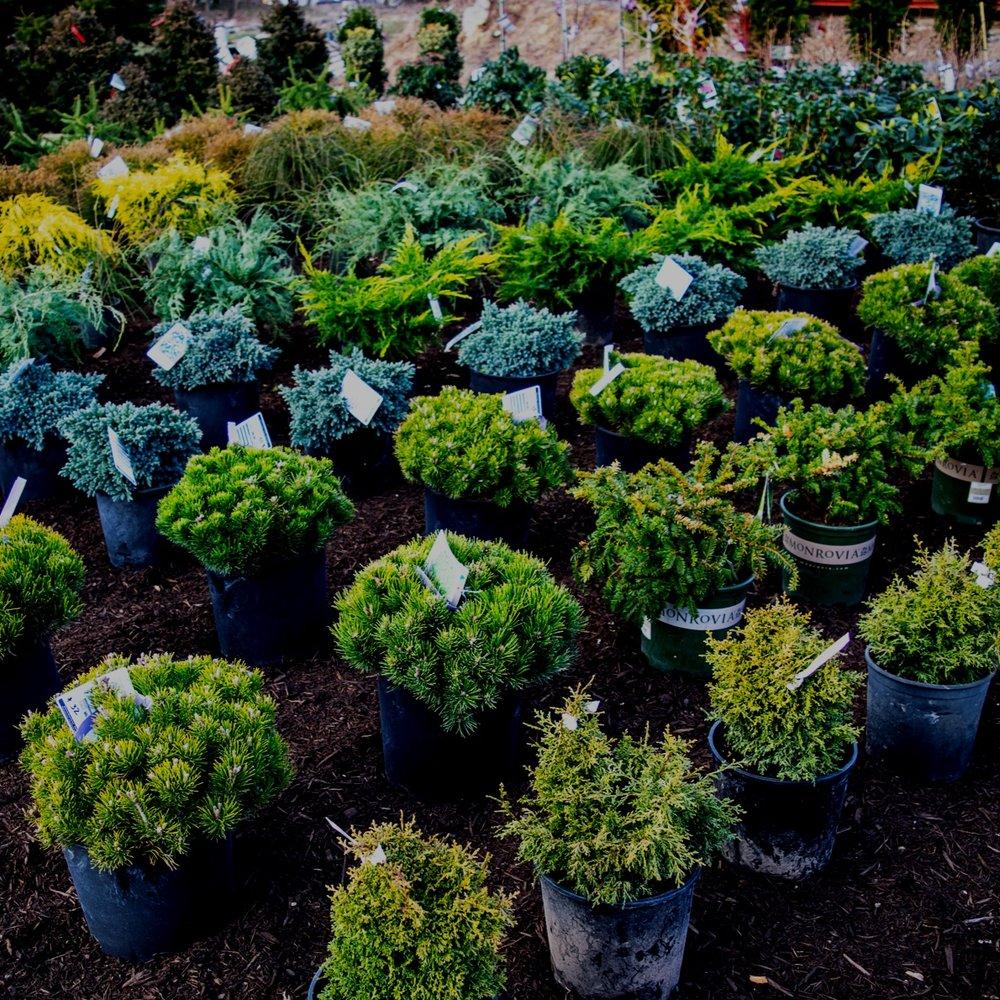 Dahlia Gardens - Home & Garden Center