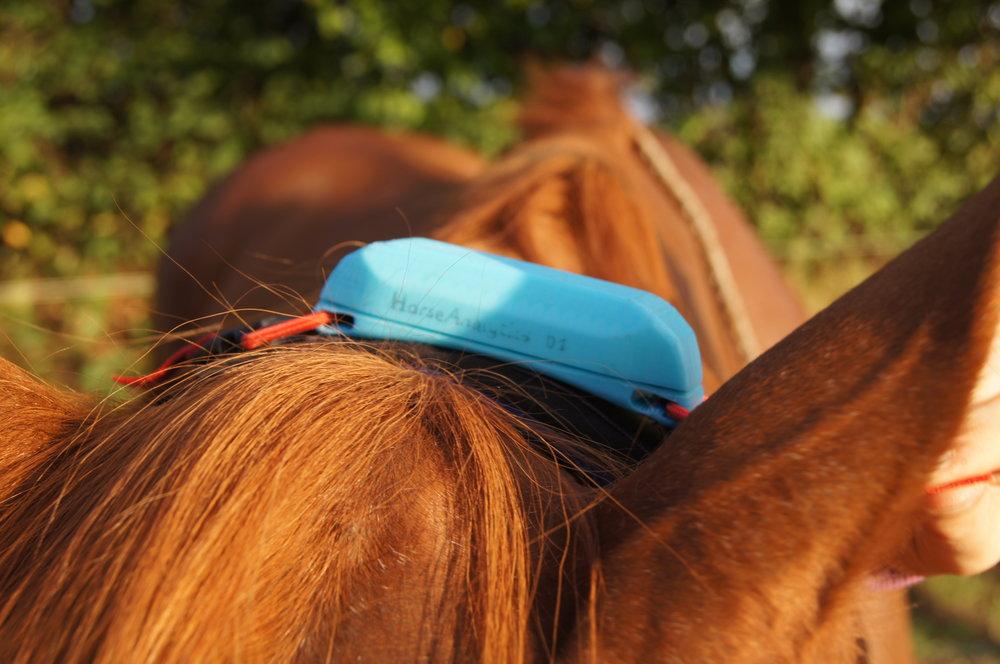 HorseAnalytics Pacer zum tracken der Bewegungsdaten des Pferdes