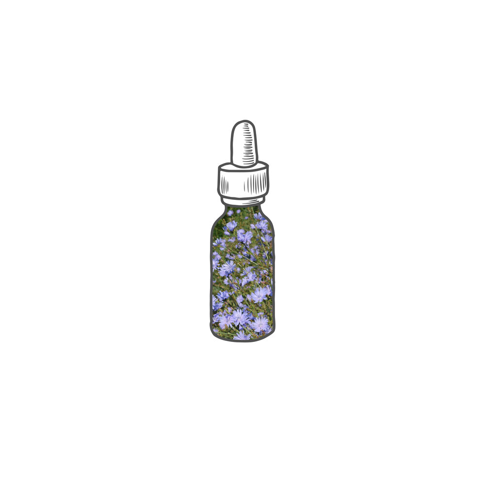 ChicoryBottle.jpg