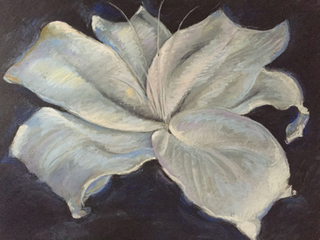 "Lily on Black Pastel, 20""x25"" unframed"