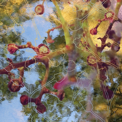 Seed Reflections Digital composition using artist's photographs