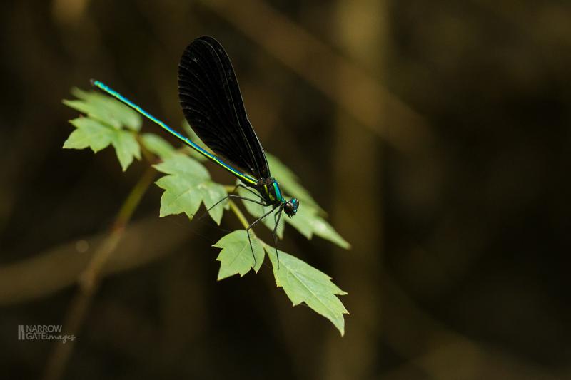 NatureandMacro--7.jpg