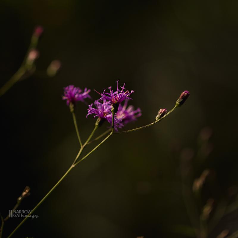 NatureandMacro-4668.jpg