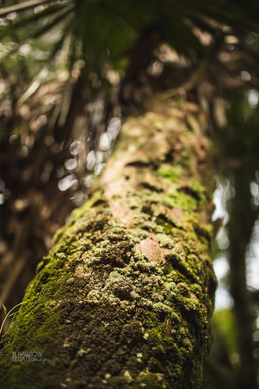 NatureandMacro-4826.jpg