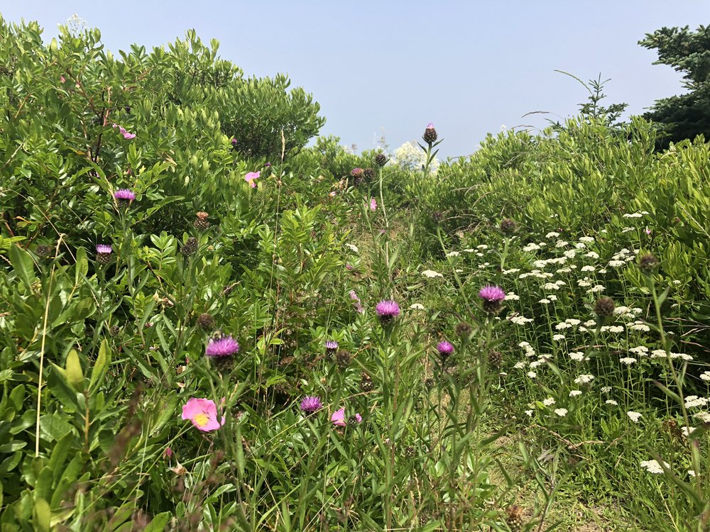 Wildflowers line the trail, and their scent fills the air.  I love thistles.