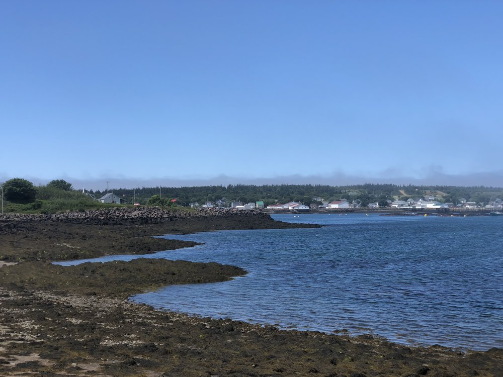 Brier Island as the fog clears--I love the receding fog bank, lilac, in the distance.
