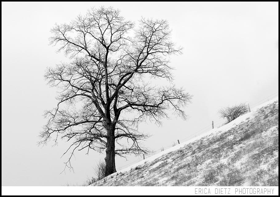 001 Tree BLOG