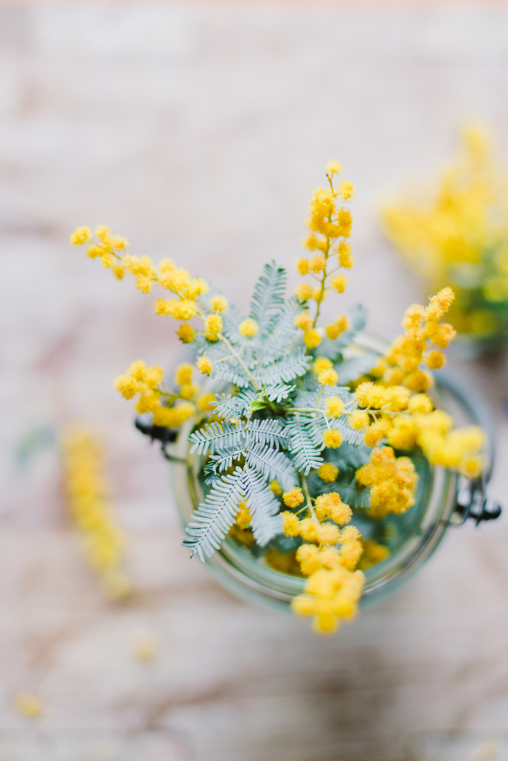 lifestyle-photographer-australia-bunch-of-wattle