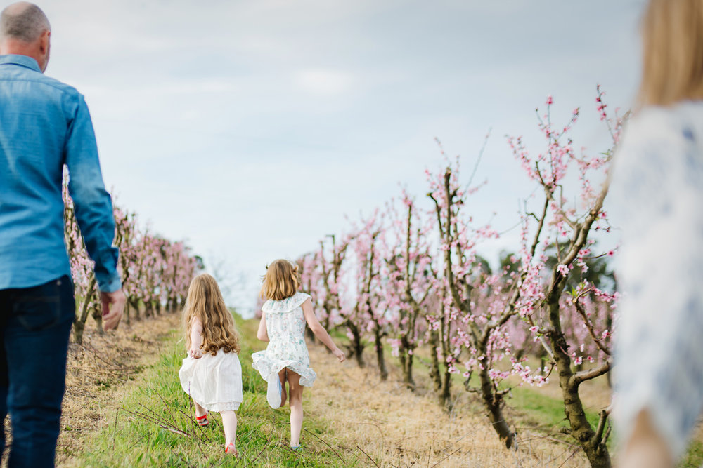 Lifestyle family photos in Sydney by Cindy Cavanagh. A family runs through an orchard in Spring.