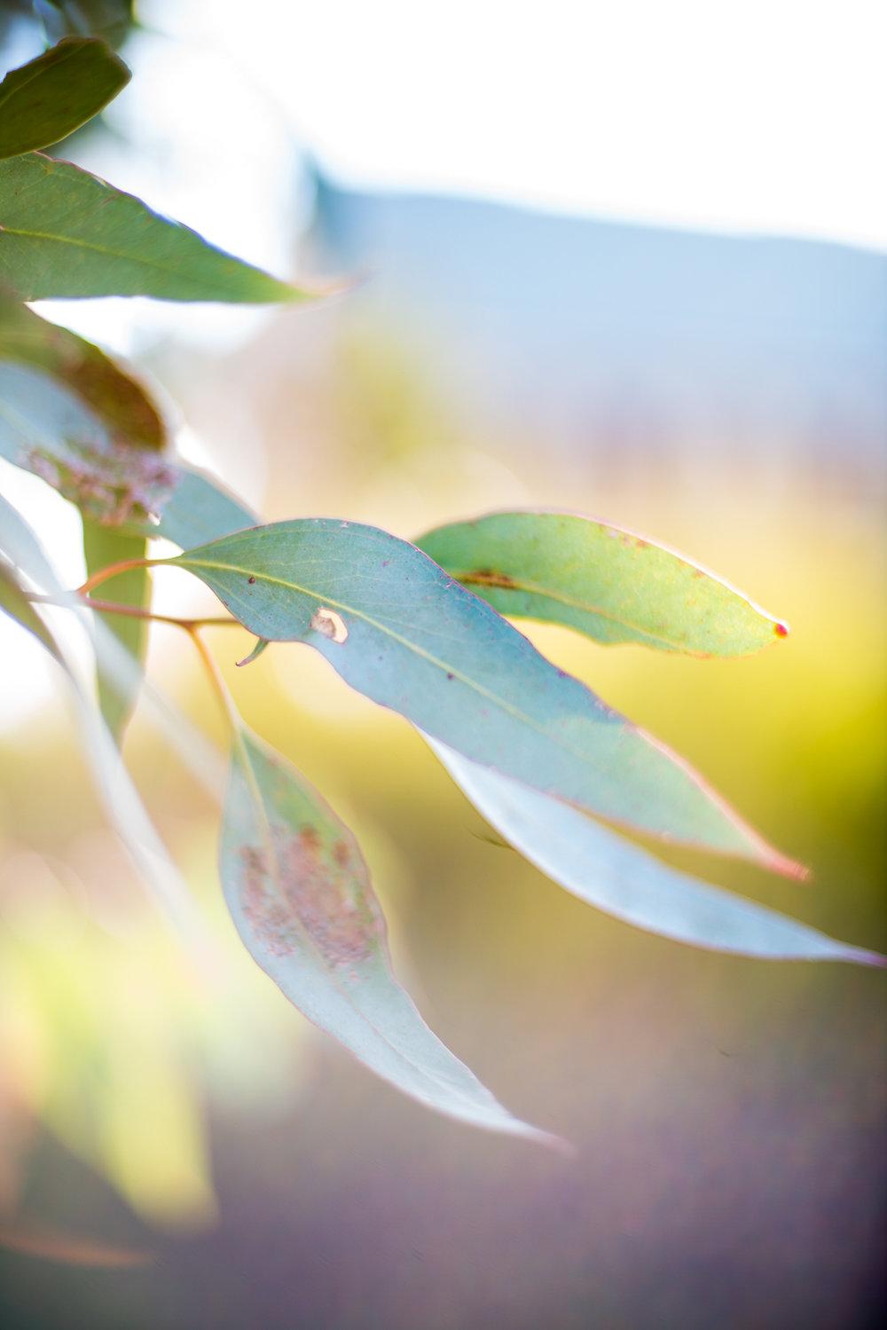 cindycavanagh-sydneyphotographer-longgrass (40 of 47).JPG