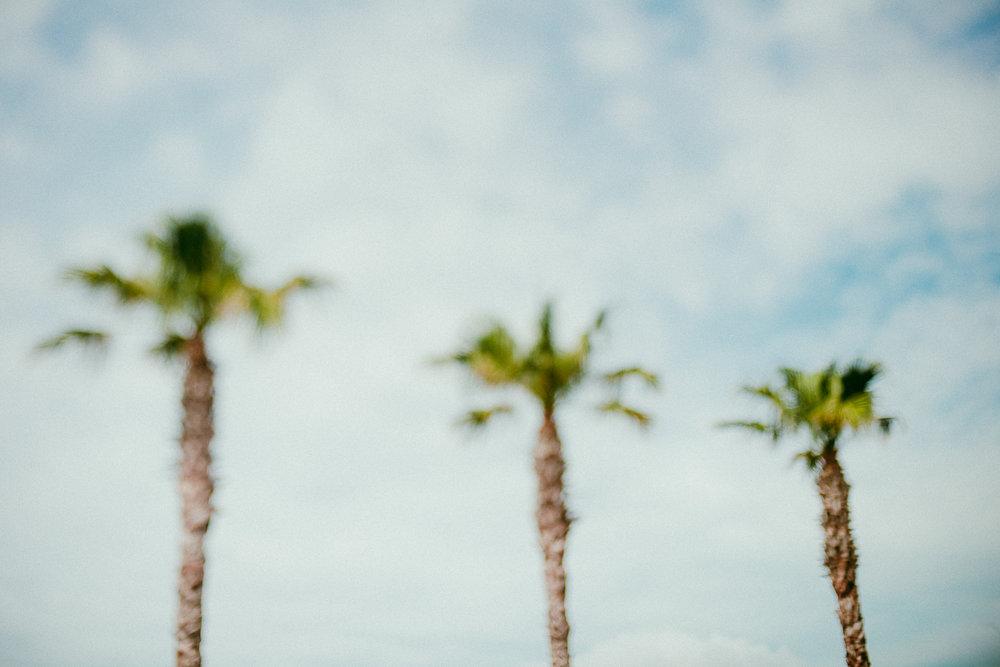 Palm trees in Bondi