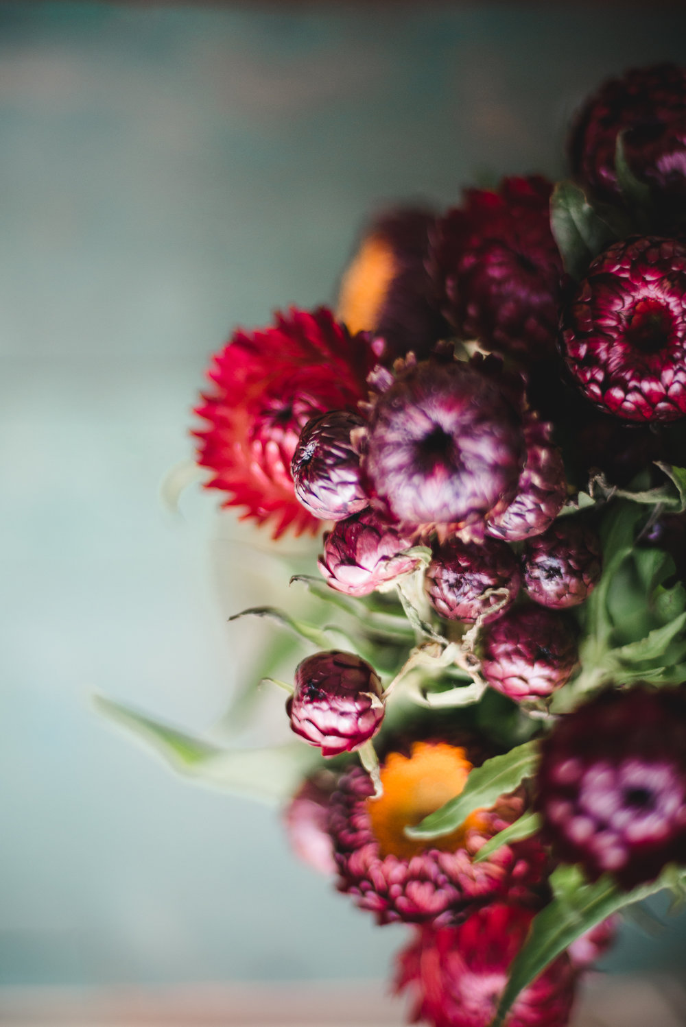 sydney-lifestyle-photography-paper-daisies