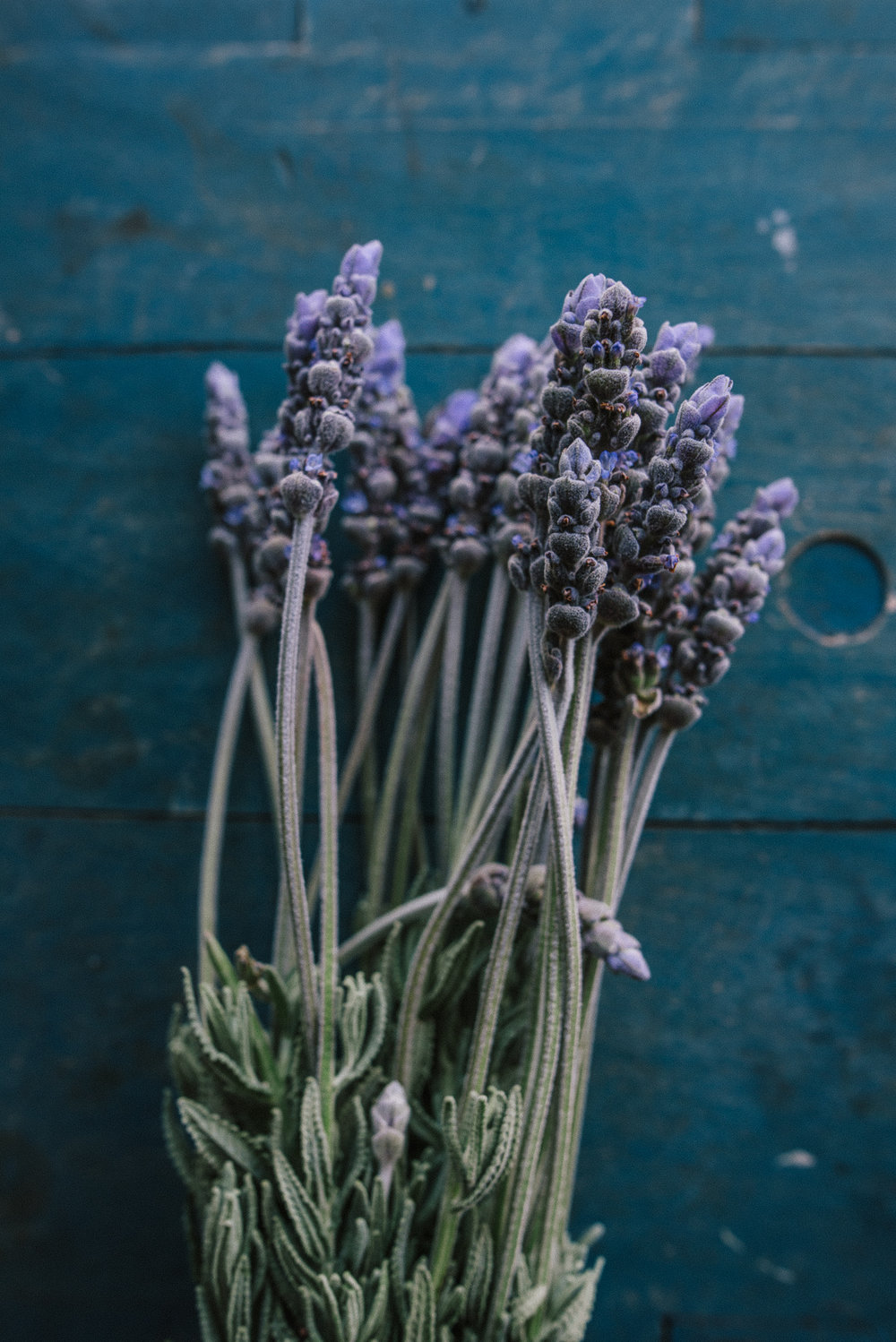 still-life-photographer-australia-bunch-of-lavendar