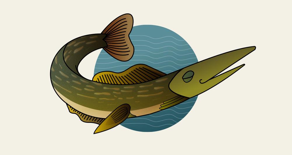 illustration11.jpg