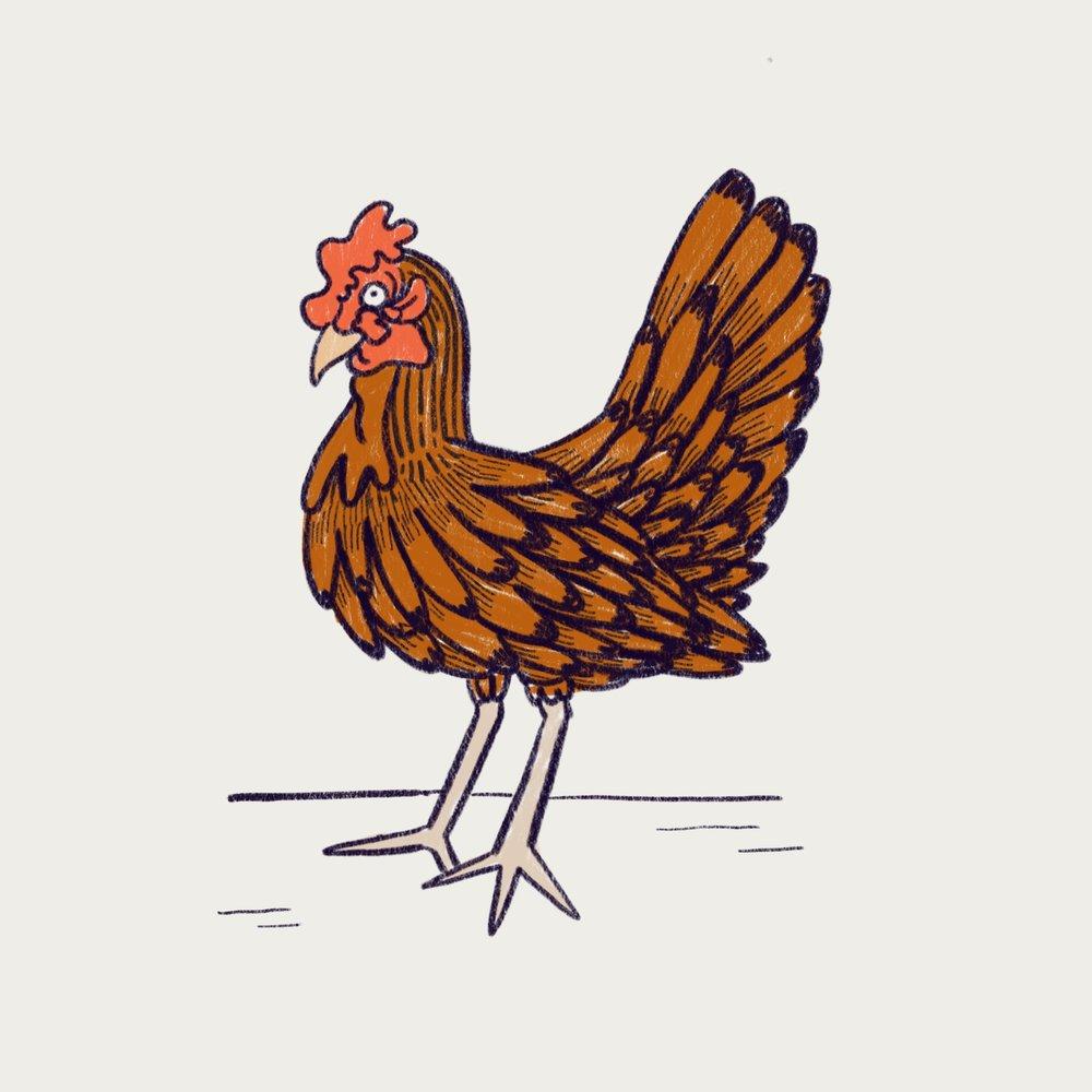 Chicken, 10.5