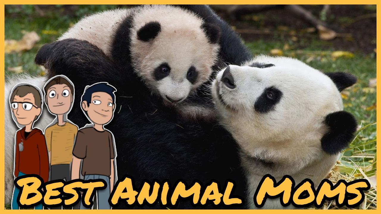 Episode 44: Best/Worst Animal Moms
