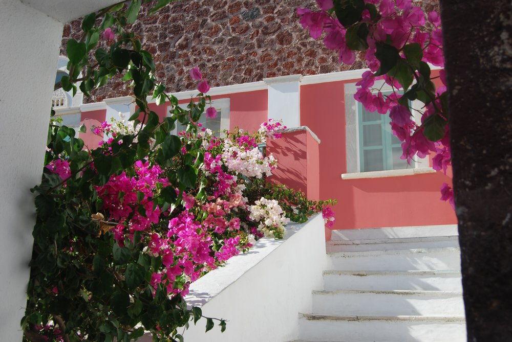 Bougainvillea, Oia, Greece