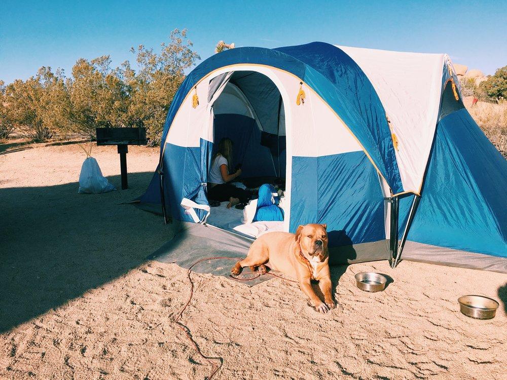 papi-guarding-tent