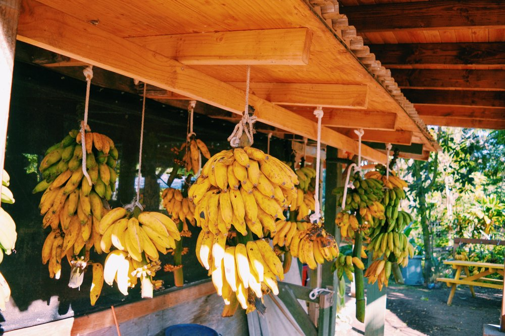 tropical-fruits-hana-farm
