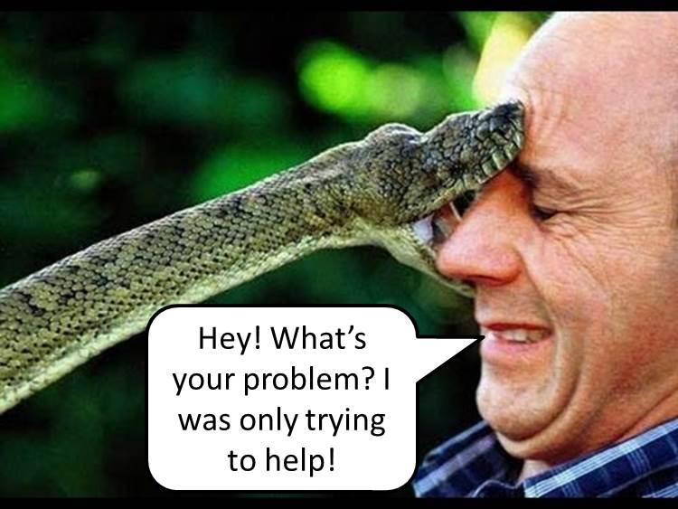 snake-bite.jpg