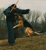 Frontal attack- Decoy work by DougWendling of www.progressivek9academy.com