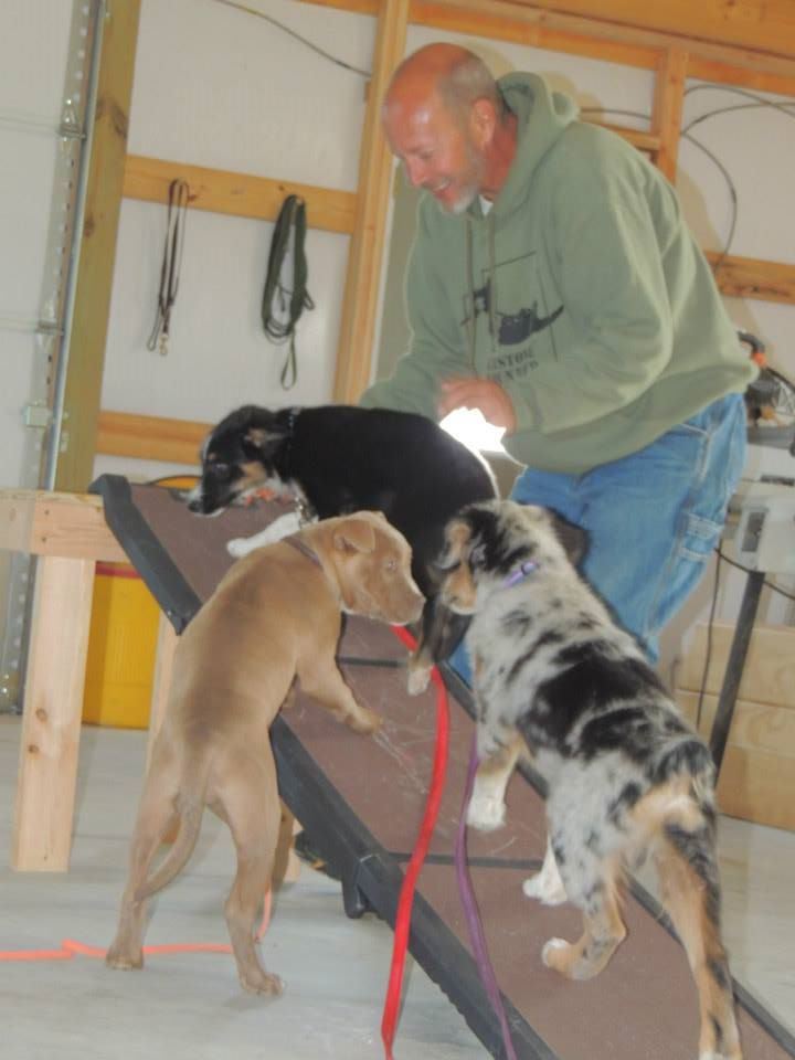 Pups learning how to climb up a ramp with Dave