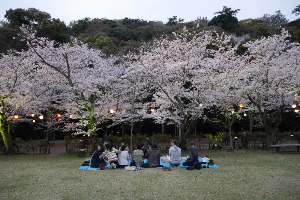 Our 'yozakura' (night sakura) hanami party