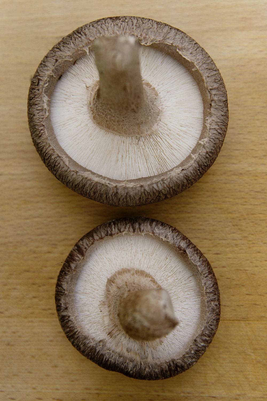 Mushrooms 001 copy.jpg