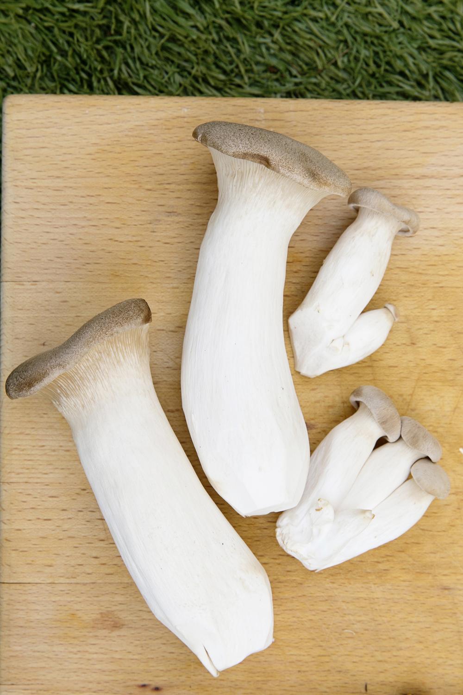 Mushrooms 005 copy.jpg