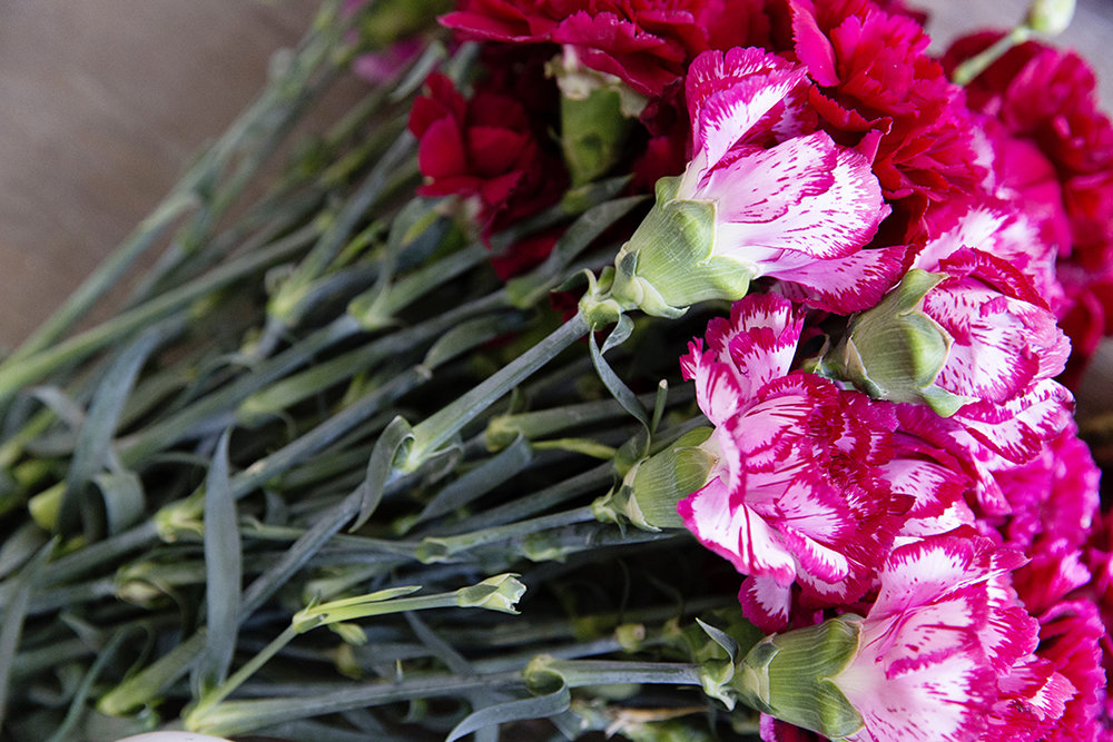 Carnation Balls 0004 copy.jpg