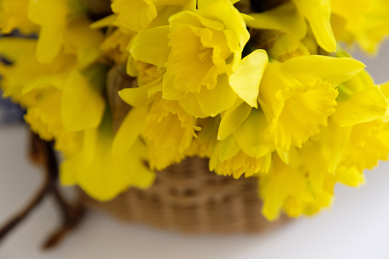Fundraising Ideas For Daffodil Day Chyka Com