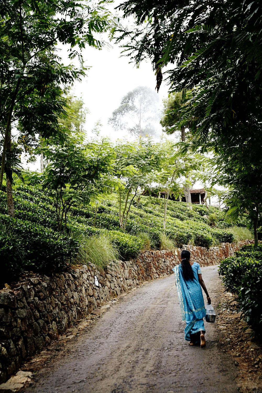 Sri Lanka Lisa 016.jpg