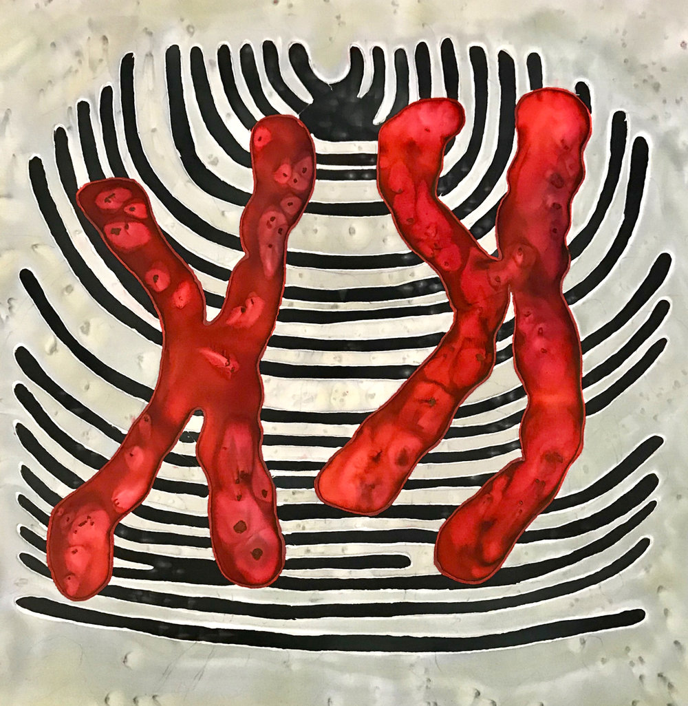 Red-XX-Chromosome-on-Silk.jpg