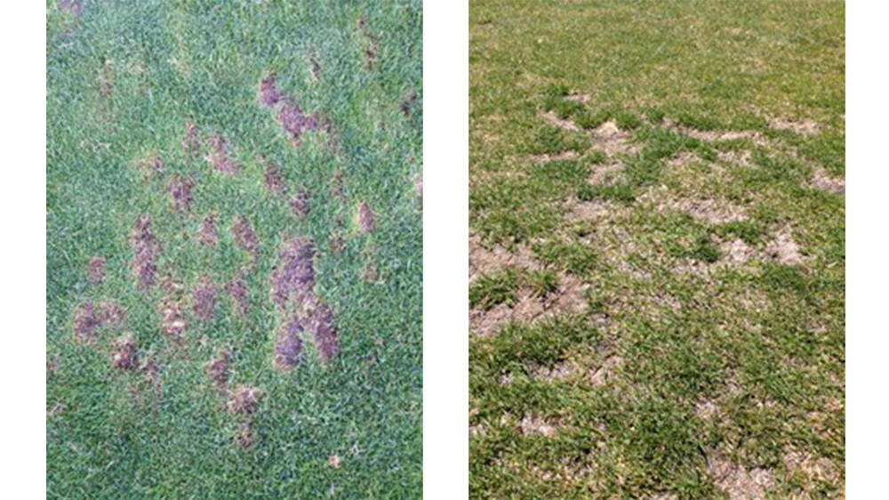 Random divot practice on left, and healing results on right.
