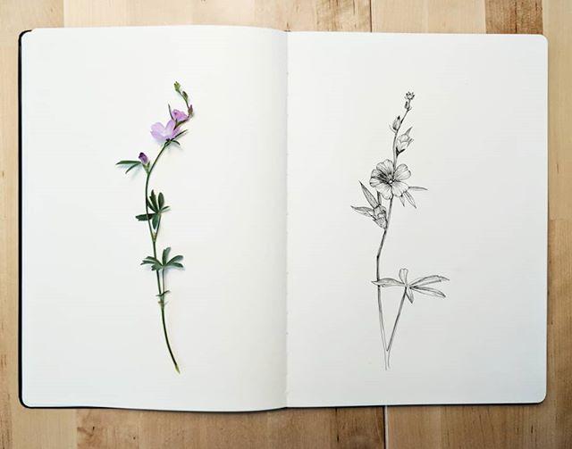 Wildflower 🌸🌿