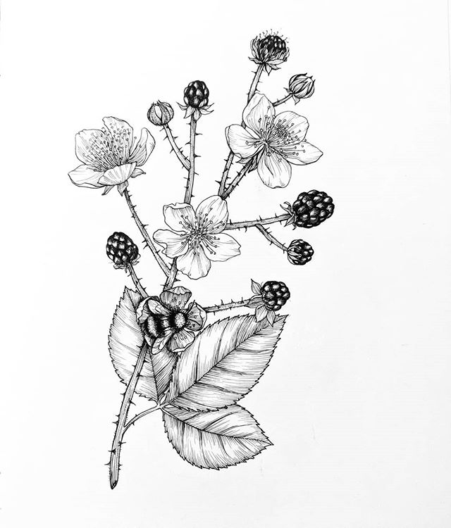 """""""We're everywhere"""" - Himalayan Blackberries"""