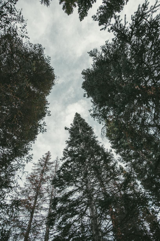 산을 오르면서 바라본 하늘. The sky as I hiked up the mountain.