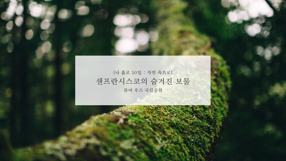 뮤어 우즈 국립공원.jpg