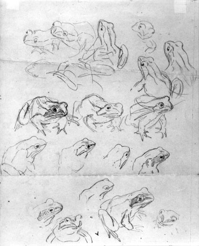 Beatrix Potter, Several Studies of Frogs, Frederick Warne.