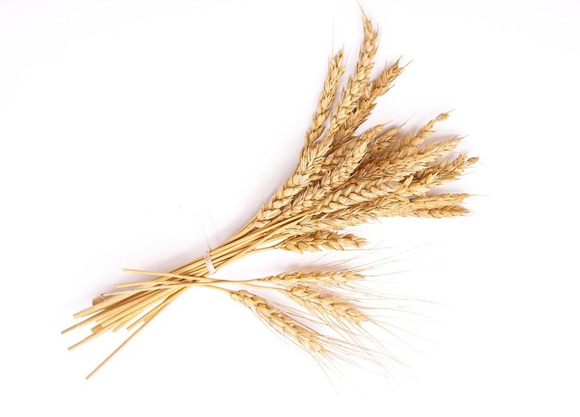 Food intolerance tests wheat Ali Jones