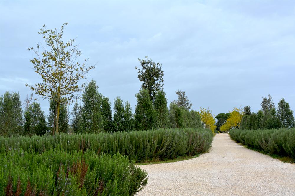 03-Tenuta-privata-Roma-Studio-Architetti-del-verde-Green-Atelier-Roma.jpg