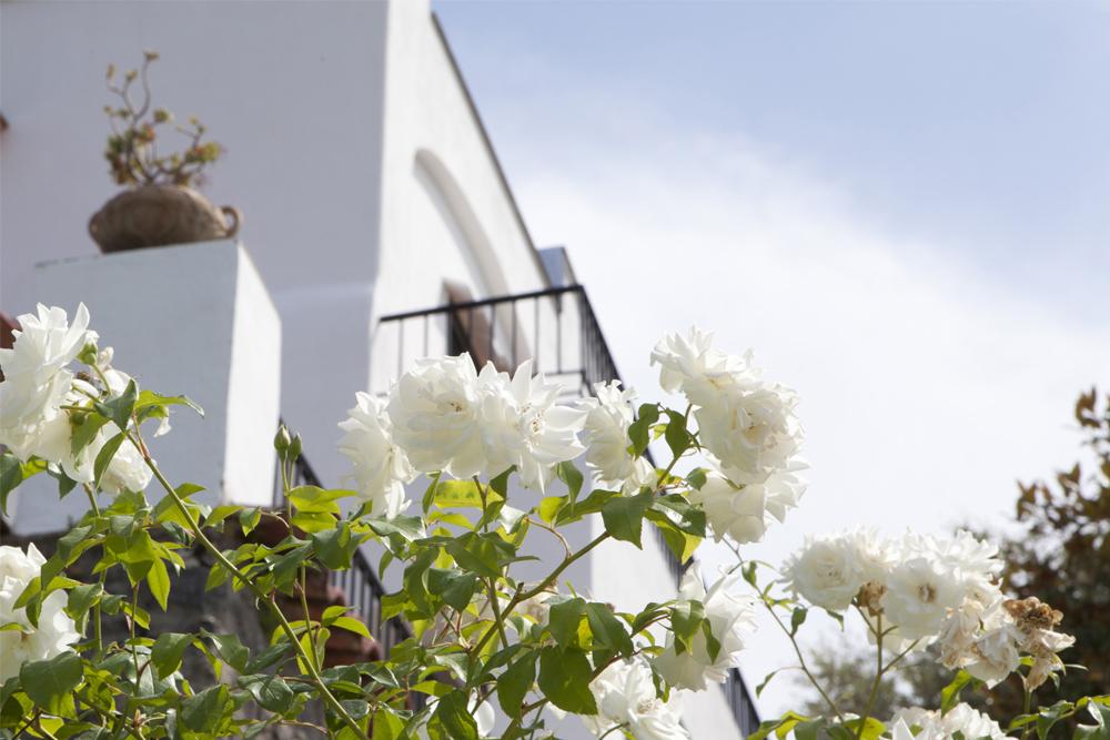 12-Giardino-privato-Casamicciola-Ischia-Napoli-Studio-Architetti-del-paesaggio-Green-Atelier-Roma.jpg