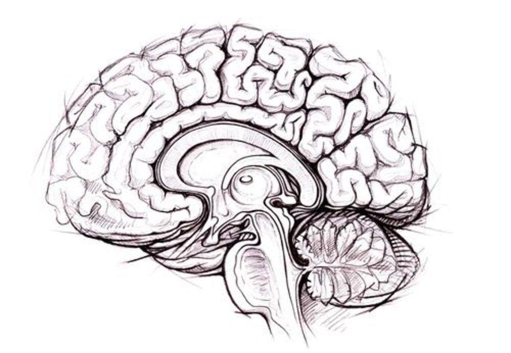 brain SS.jpg
