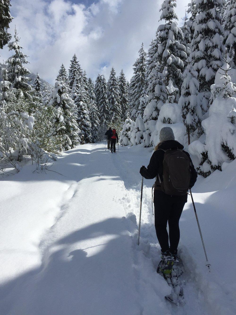 WinterZeit  -  Schnee.jpg